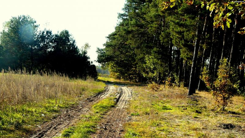 Leśnicy zbudują nam drogi?